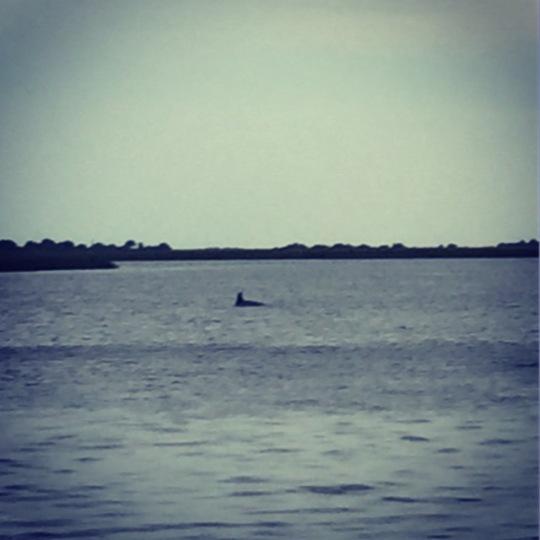 Hey look, a dolphin!